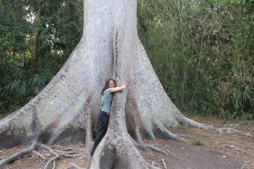 A big hug for a big tree